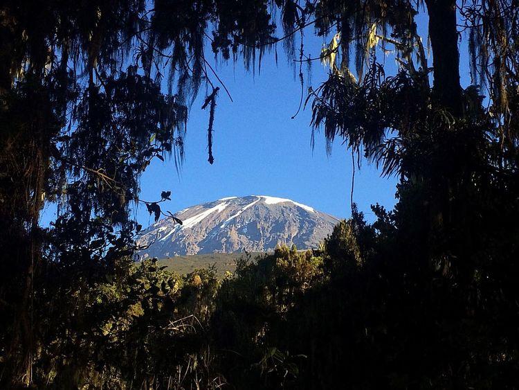 Kilimanjaro Kilimanjaronationalpark Tanzania Tanzanianationalparks Trees Mountain Mountaintop Mountain View Mountains And Sky Gadventurestour Gadventures Beauty In Nature
