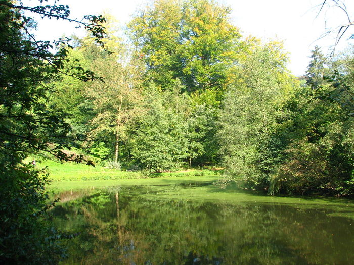 Beauty In Nature Brussels Brussels❤️ Day Grass Green Color Growth Nature Nature Nature Photography Nature_collection Naturelovers No People Outdoors Park Scenics Tranquility Tree Water Watermael Willow Tree