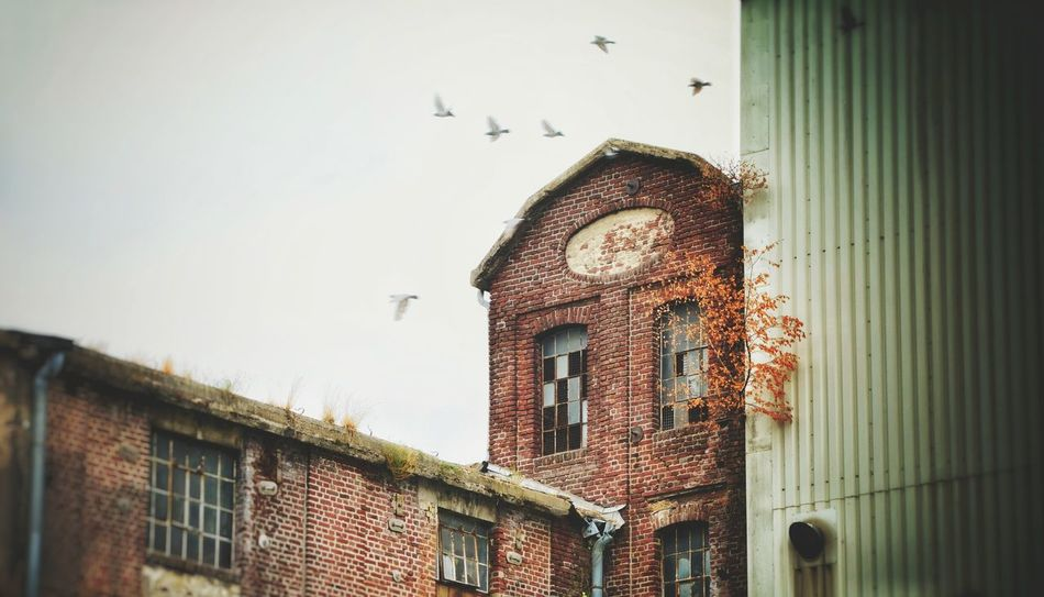 Broken Window Light And Shadow Abandoned Abandoned Places Faktory Out Of Order Low Angle View Lostplace Bird Building Exterior Close-up Sky
