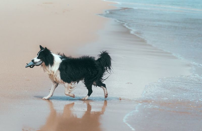 Dog Walking On Sand At Beach