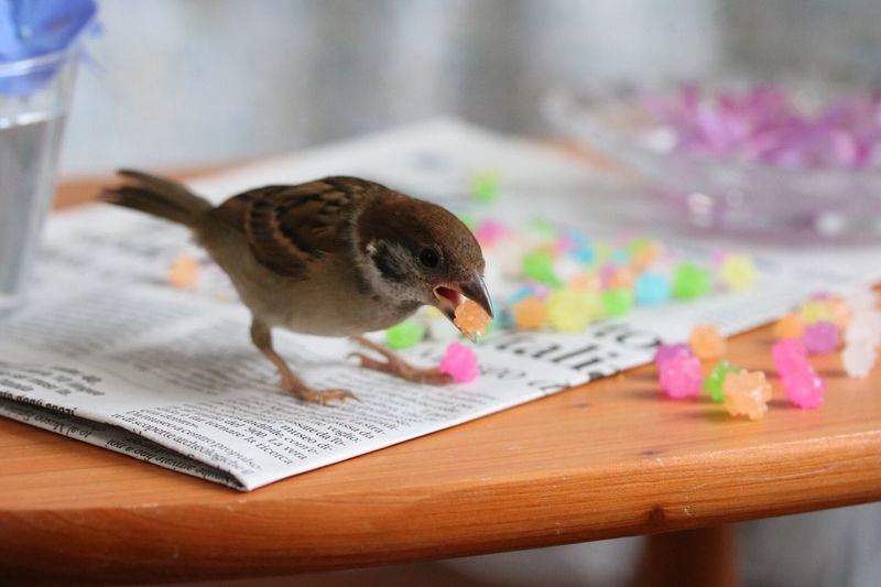 Close-up of sparrow with candies on paper at table