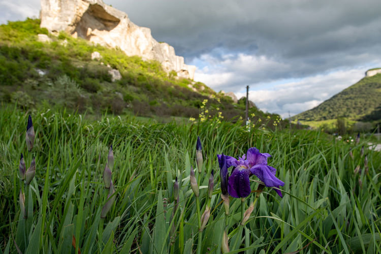 Plant Flowering Plant Flower Beauty In Nature Cloud - Sky Freshness Vulnerability  Purple Growth Nature Fragility Sky Green Color Land Day Petal Inflorescence Architecture Flower Head Field No People Outdoors Iris
