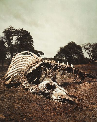 Close-up of animal skull on field against sky