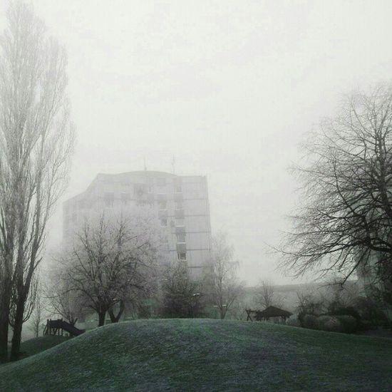 I går var det så frostigt och vackert på morgonen i FR ölunda