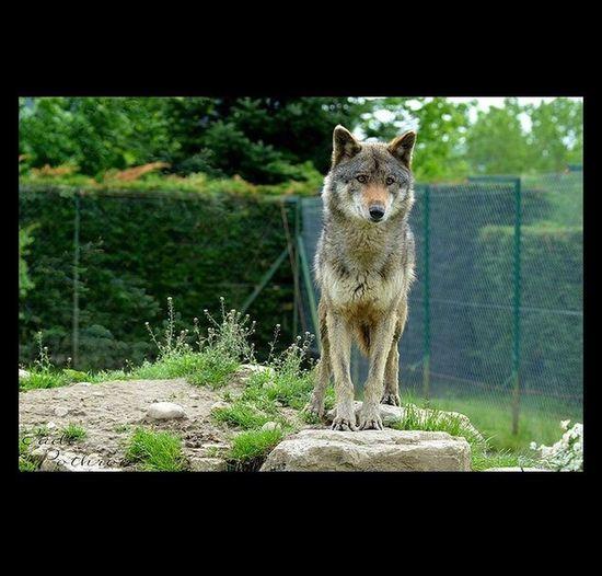 Zoo Fitilleu, ? Zoo Animals  Lou