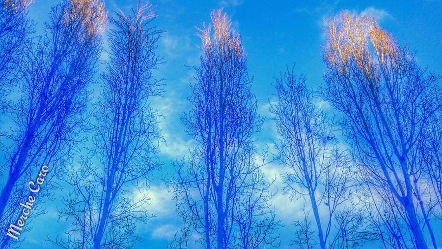 Atardecer Hora Azul Gallecs Arboles
