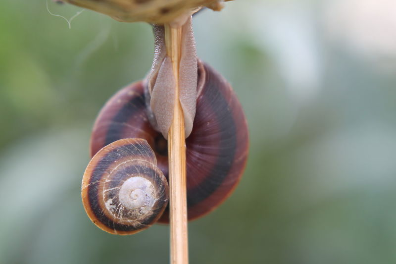 The Purist (no Edit, No Filter) The OO Mission Snails Snail Natute_collection Snail🐌