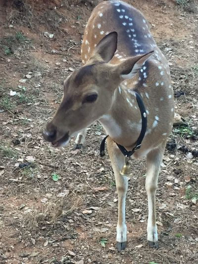 Animal Themes One Animal Vertebrate Mammal Domestic Animals Land Animal Wildlife Outdoors