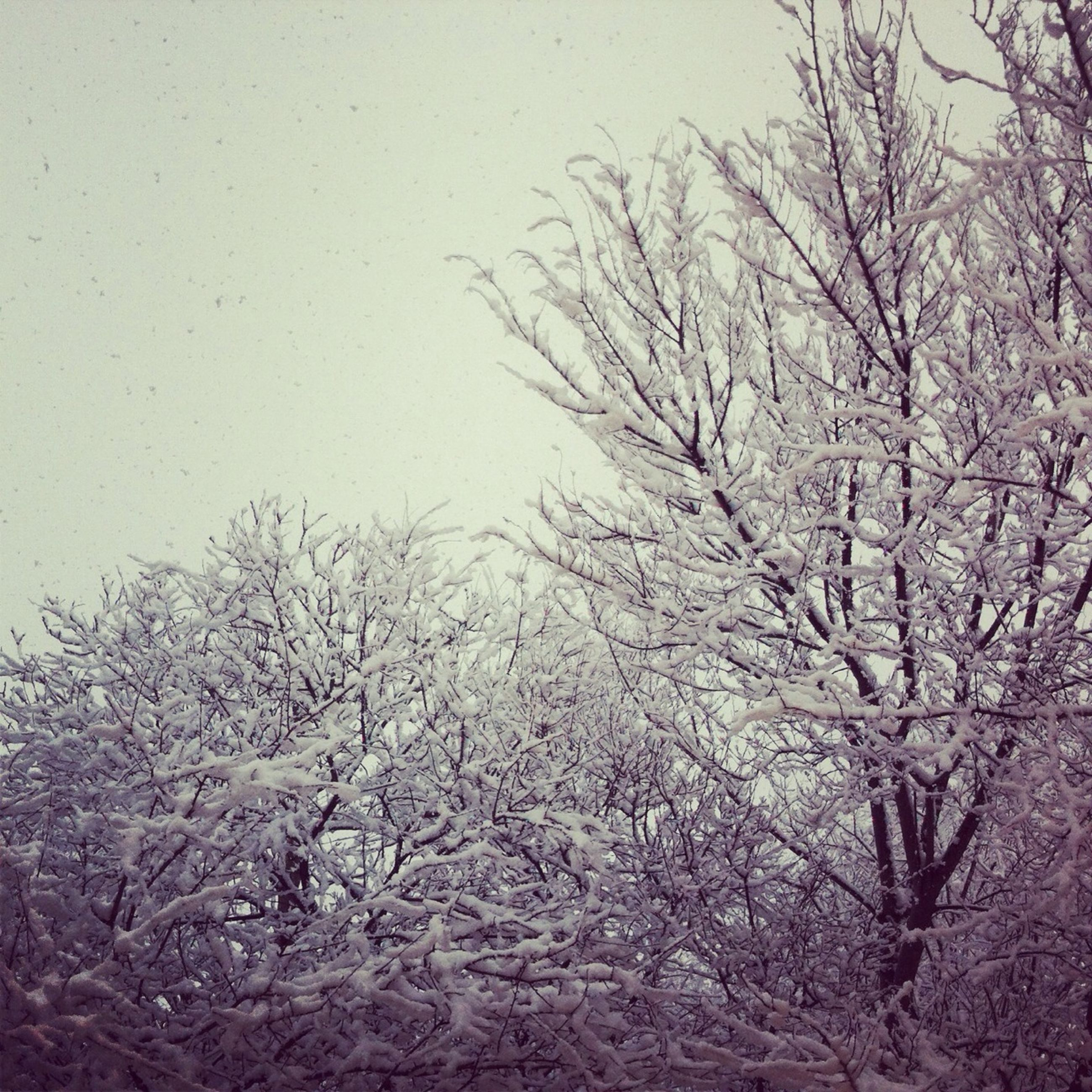 bare tree, tree, branch, winter, cold temperature, weather, tranquility, snow, nature, season, clear sky, day, tranquil scene, no people, outdoors, beauty in nature, scenics, covering, sky
