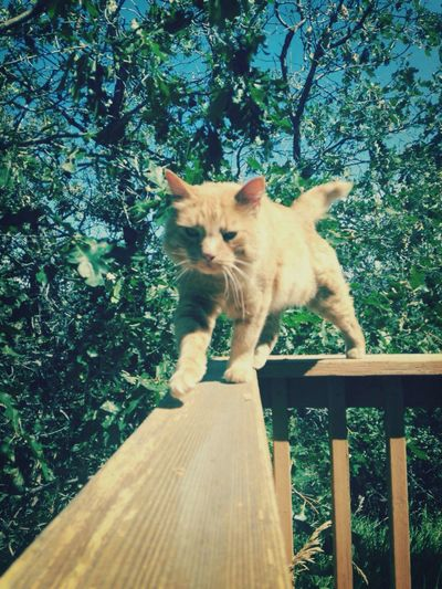 Kitty kitty! First Eyeem Photo