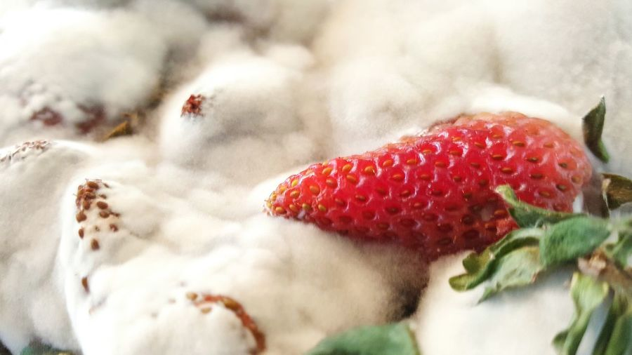 Mold White Red Fuzzy Snow Engulf Take Over Overtake Desolate Life Death Renewal  Parasite Strawberry Green Leaf Seed The Still Life Photographer - 2018 EyeEm Awards