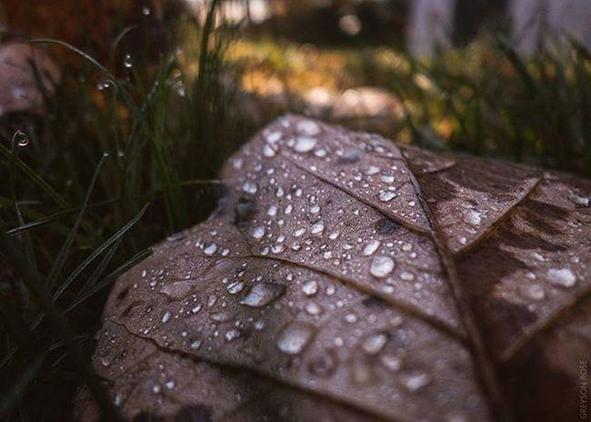©Greyson Rose Photography Phillyphotographer Sonyalpha Sonyphotography Sony Dslrphotography Greysonrosephotography 35mm Drops Leaf 🍂 Leaf Autumn