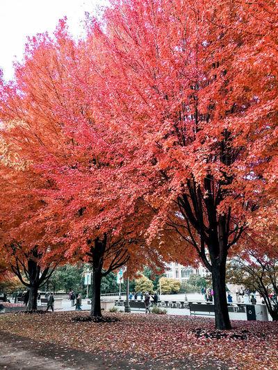 Autumn Chicago