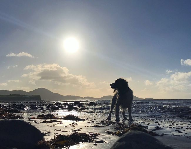 Wintery waves with wet dog in Waterville Sky Sun Beauty In Nature Beach Dog Waterville Kerry Ring Of Kerry Sea