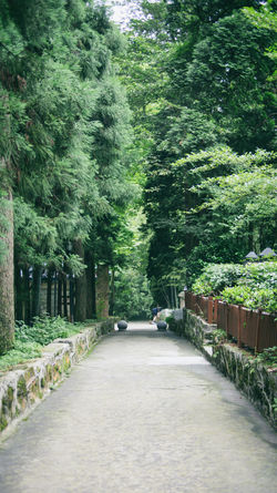 Documentary Footpath Forest Green Growth Lushan Nature Outdoors Pathway Photograph The Way Forward Traveling Tree Villa