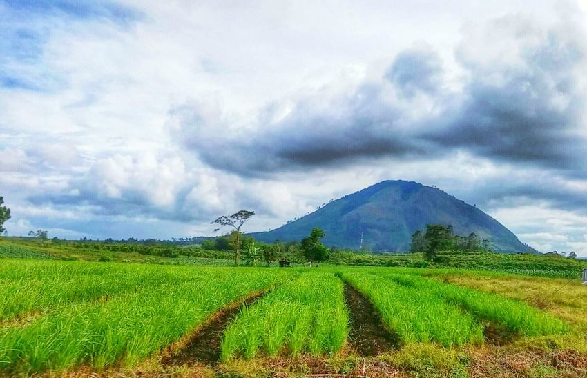 Nature Harmony Landscape_Collection The EyeEm Facebook Cover Challenge Rice Field How's The Weather Today? Mint By Motorola Exploring New Ground South The Adventure Handbook