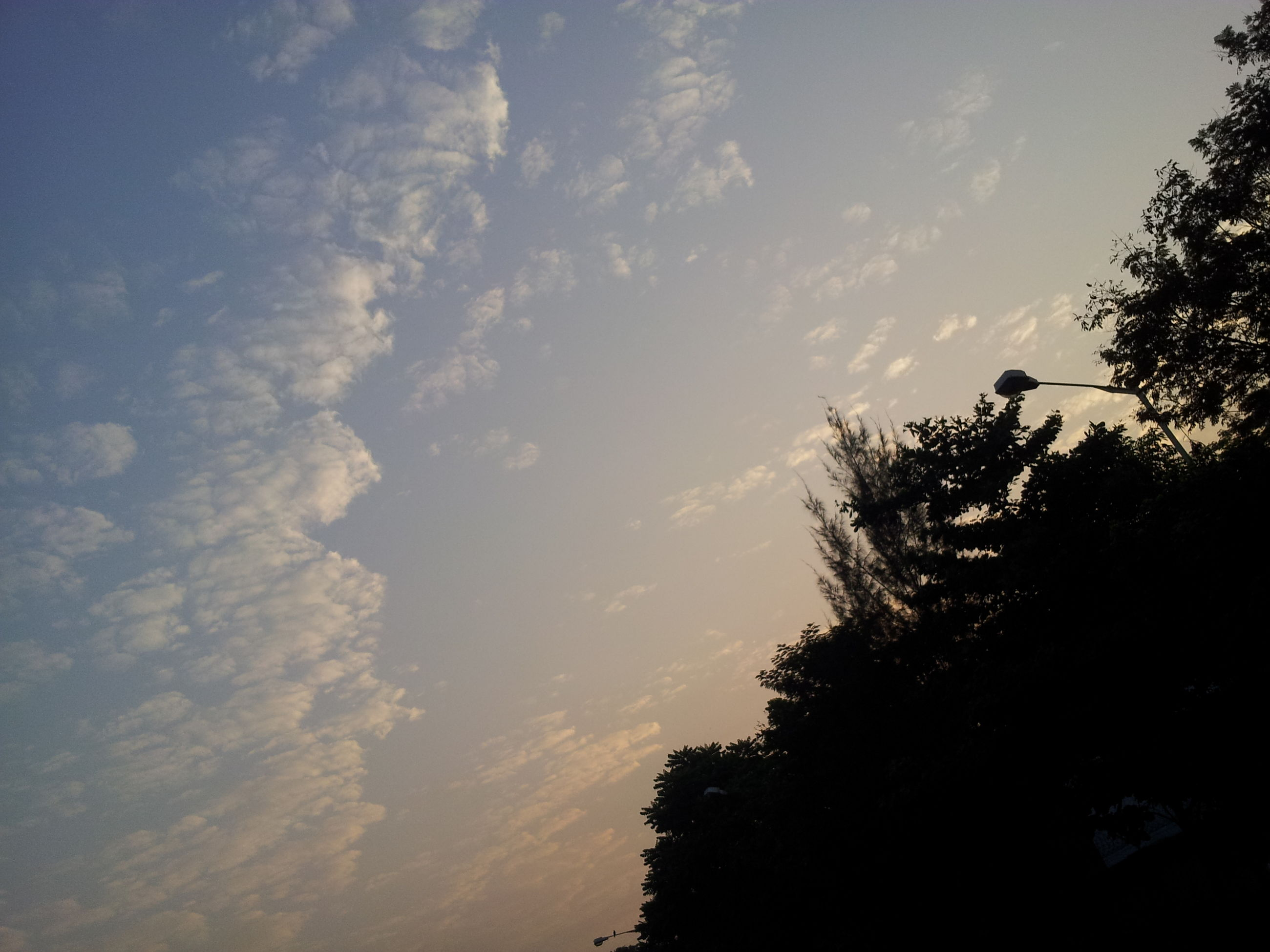 tree, silhouette, low angle view, sky, tranquility, beauty in nature, tranquil scene, scenics, nature, growth, cloud - sky, branch, outdoors, no people, dusk, idyllic, cloud, blue, day, forest