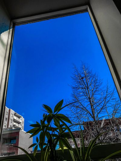 Blue Tree Architecture Window Low Angle View Growth Clear Sky Built Structure Day No People Building Exterior Outdoors Nature Sky