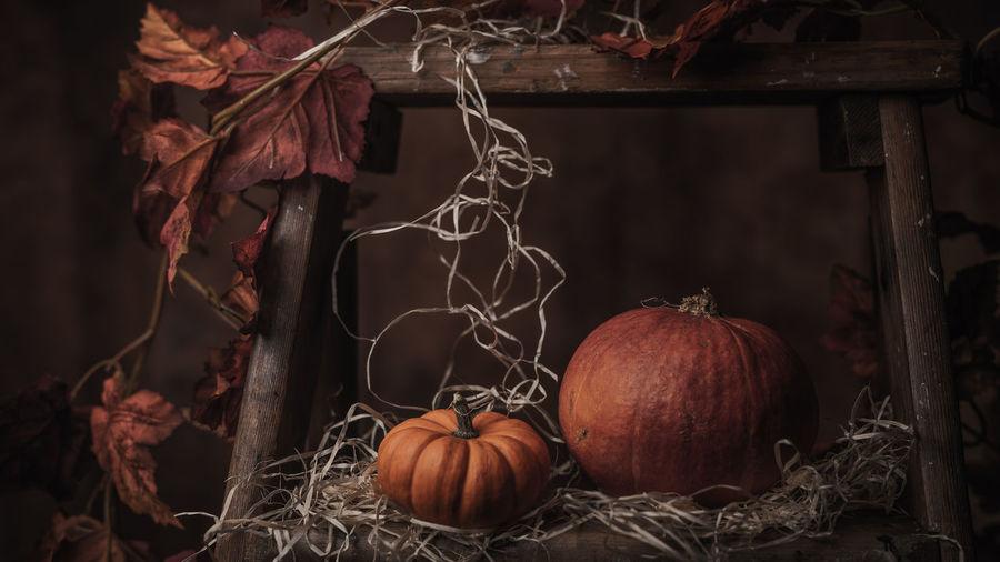 Close-up of pumpkins in garden during autumn
