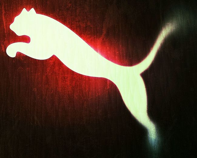 Red Shadow Cat