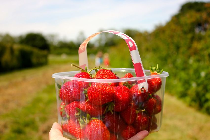 pick your own strawberries Close-up Day Focus On Foreground Food Food And Drink Freshness Fruit Healthy Eating Healthy Lifestyle Holding Human Body Part Human Hand Nature One Person Outdoors People Ready-to-eat Real People Red Sky Strawberry Water