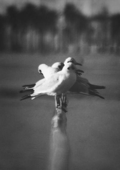 Seagulls EyeEm Bnw Blackandwhite Keeping An Eye On The World
