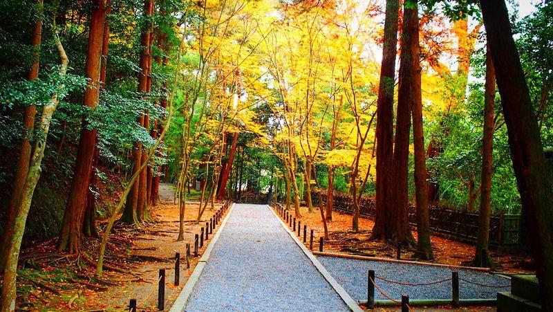 法然院 京都 Kyoto Beauty In Nature Autumn Colors Kyoto, Japan Travel Destinations Kyoto Autumn Autumn Leaves Relaxing Enjoying Life Hello World 紅葉