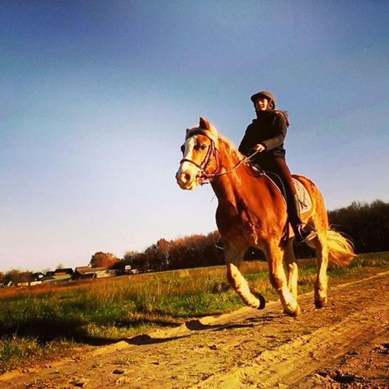 Look Her Having Fun Such A Heartmelting Moment My Lovely Girlfriend Riding Her Horse Trough The Fields At Home Nice Moment To  Take Some  Pics we love animals 420 bjorngruppen dutch