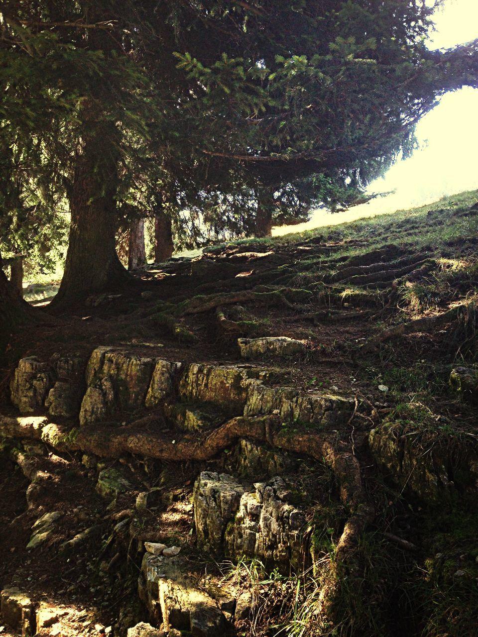 Trees Growing On Rocks