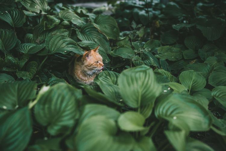 Cat Sitting Amidst Plants