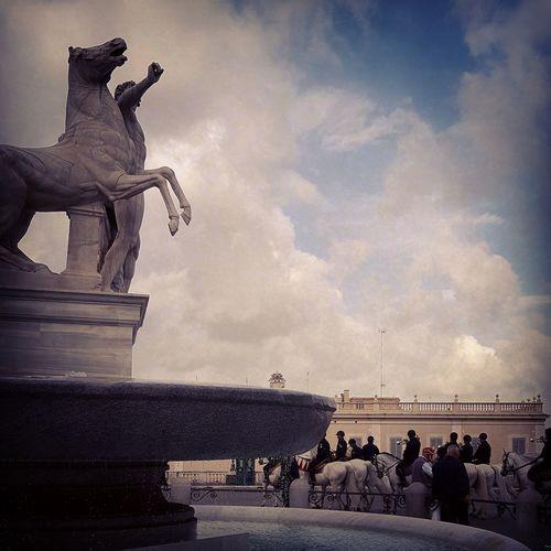 Horses Roma