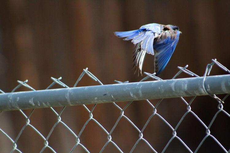 Close-up of bird in flight