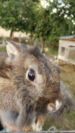 💙rabbit 😍 Rabbit Love #beautiful #likeforlike #likemyphoto #qlikemyphotos #like4like #likemypic #likeback #ilikeback #10likes #50likes #100likes #20likes #likere EyeEmNewHere Like4like Like Photography Domestic Animals Cute Instagood Instalove I EyeEm Selects Pets Portrait Close-up Animal Eye Animal Nose Animal Head  Animal Body Part Animal Mouth Animal Ear Animal Face Eye 10