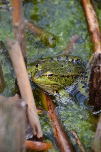 by Jacqueline Muhlack Cologne Köln Germany Photography Fotografie Fotografieren Hobbyfotograf Photographer Flora Animal Tier Frosch Frog