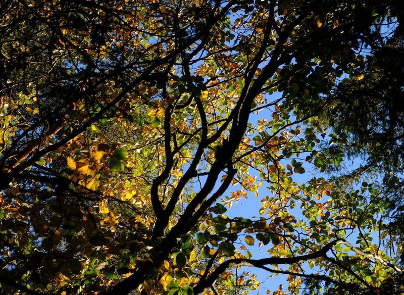 Can you see the squirrel? Squirrel Autumn Beauty In Nature Branch Full Frame Leaf Low Angle View Outdoors Plant Scenics - Nature Tree