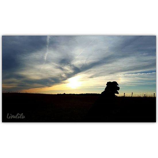Valladolid Vallaigers MeGustaPucela Igersvalladolid Estaes_Valladolid Estaes_castillaleon Estaes_espania Estaes_cielos Estaes_de_todo EstaEs_Universal_2 Estaes_natura Be_one_natura TodoEs_CastillaLeon Todoes_spain Loves_castillayleon Loves_world Total_CastillayLeon Total_sky Photooftheday Like Beautiful Sunset Sinfiltros EstaEs_Universal_4 Estaes_animal Ke_AnimalPets_of_our_WorldWorld_BestAnimalsIr_Animal @instagramers