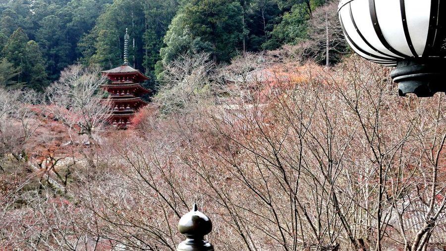 【Nara,Japan】Hase