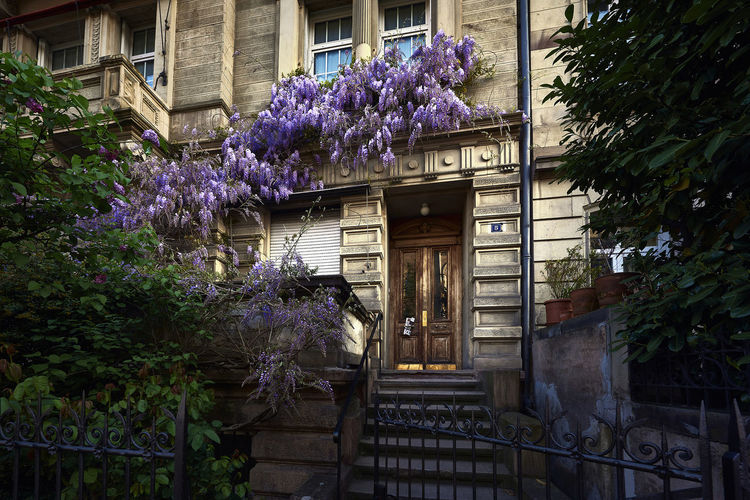 The Door Architecture Building Exterior Built Structure Day Door Façade Flower Growth House Nature No People Outdoors Plant Purple Tree