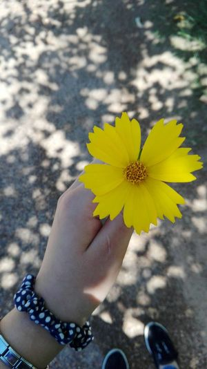 Flower One Person Outdoors Personal Perspective Yellow Fragility Focus On Foreground Holding Sosteniendo Flores Persona Al Aire Libre Perspectiva Amarillo Fragilidad Primer Plano Hand Mano Petalos Petals Bonito Nice Shades Sombras Fotography