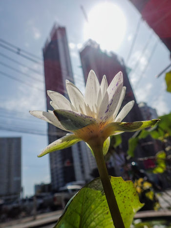 Close-up Focus On Foreground Plant Part Lotus Flower Flowering Plant Sunlight Freshness Flower Growth