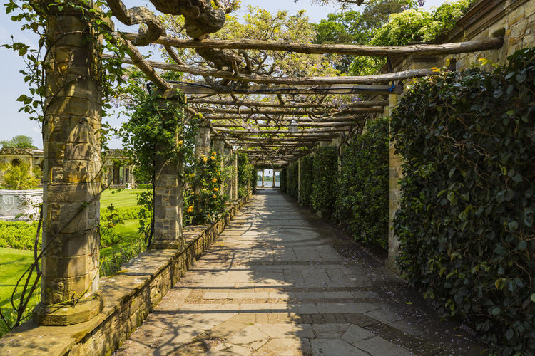 A trellis walkway leading to Hever Lake, Hever Castle & Gardens, Hever, Edenbridge, Kent, England, United Kingdom Architecture Beauty In Nature Day Flower Growth Nature No People Outdoors Scenics The Way Forward Tree