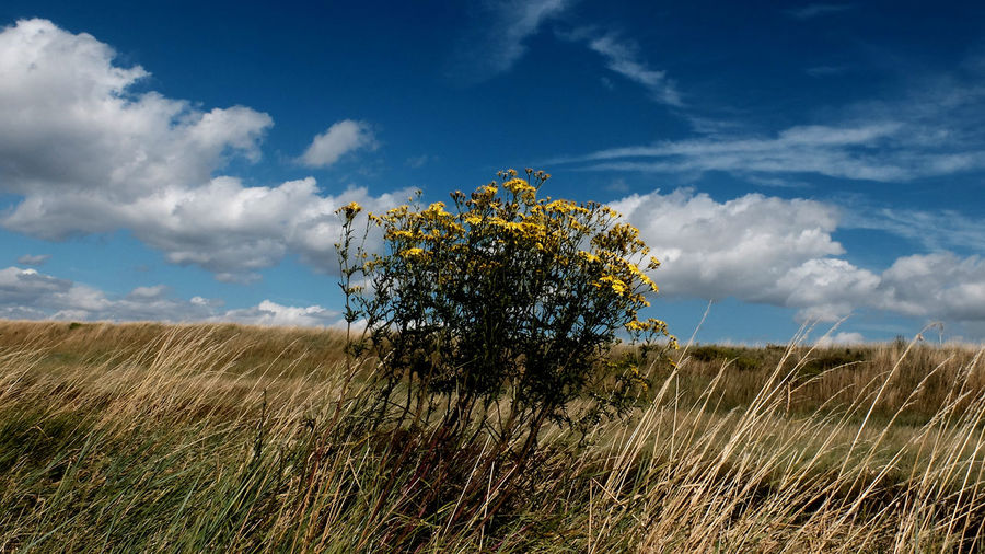 Plants on field against sky