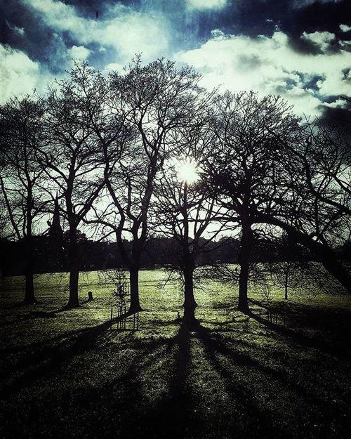 Earth & Sky (Day 20 of 366) Sky Trees Shadows Nature X100S Fujifilm Repostmyfuji Nickblak