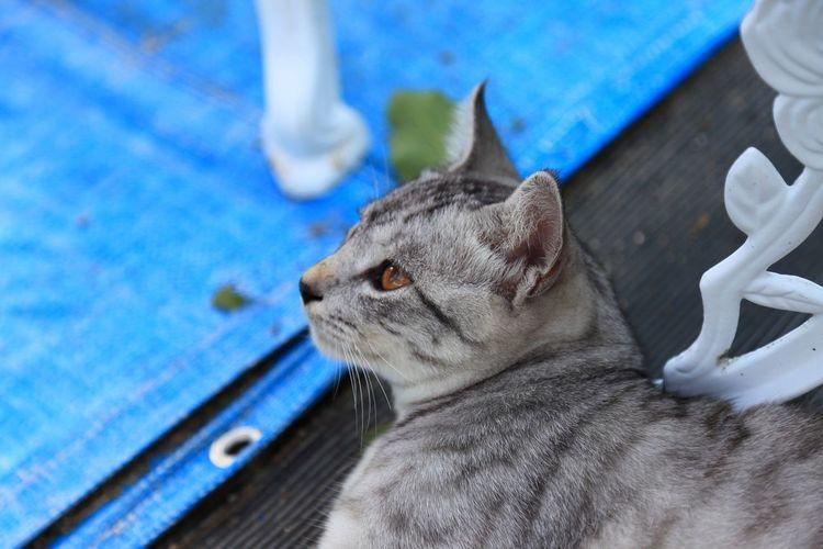 見つめる猫♪(*^^)/