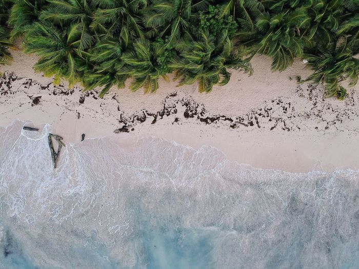 Where Jungle meets Ocean. 2018: was all about oceans for me. DJI X Eyeem Summer Exploratorium From Above  Palm Trees Jungle Dronephotography Drone  Tropical Natural Green Waves, Ocean, Nature Beach Ocean Wave No People Day Nature Plant Tree High Angle View Land Outdoors Beauty In Nature Sand Pattern Tranquility Sunlight Beach The Great Outdoors - 2018 EyeEm Awards The Great Outdoors - 2018 EyeEm Awards 2018 In One Photograph