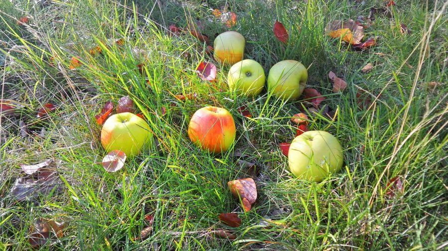 apples Under