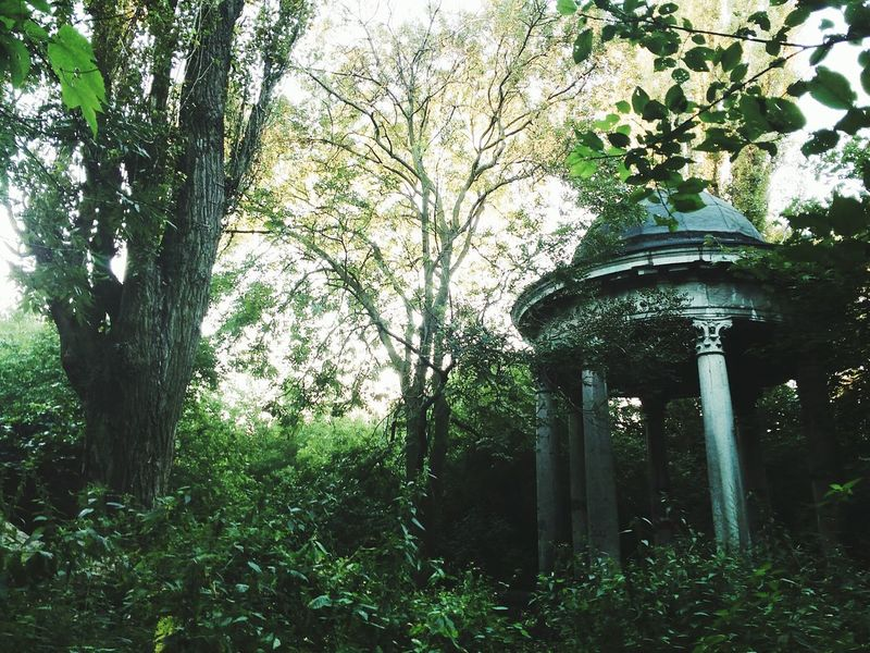 Tree Branch Low Angle View Growth Nature Scenics Outdoors Day Green Color WoodLand Tranquility Tranquil Scene Formal Garden Non-urban Scene Monument Misterious Misterious Landscape Mysterious Place Forgotten Place The Magic Mission
