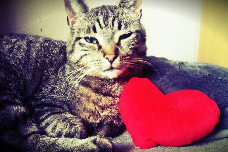 Katzen Meow Cat Gary Herz