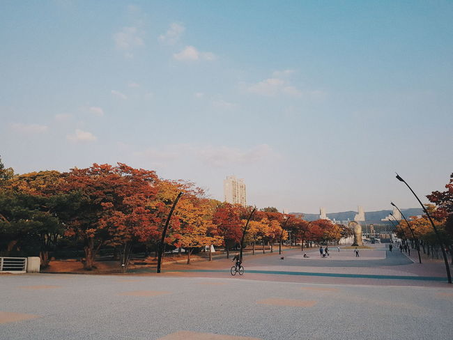 Tree Outdoors Sky Day Nature Beauty In Nature Korea Tree Nature Beauty Vacations Autumn Trees Korea Autumn Autumn Autumn Colors Autumn 2017 Korea Korean Korean Autumn Korea Trip Autumnbeauty Garden Olympic Park  Olympic National Park Public Garden Landscape