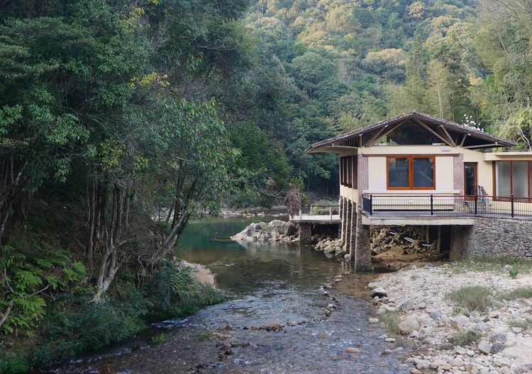 House by river amidst trees in forest